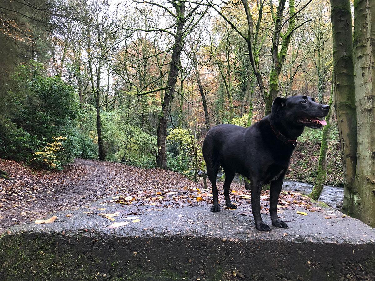 The dog, on Saturday.